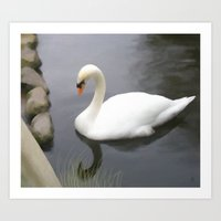 swan Art Prints featuring Swan by IvanaW