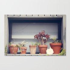Window pots Canvas Print