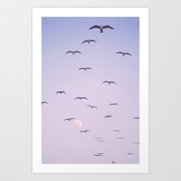 Seagulls & Moon by Murray Bolesta Art Print