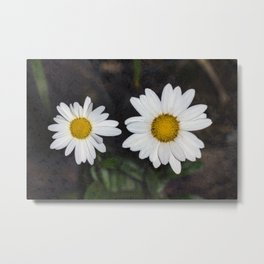 Old And Young Daisies Texture Metal Print