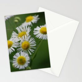 Miniature wild flower daisies in bloom Stationery Cards