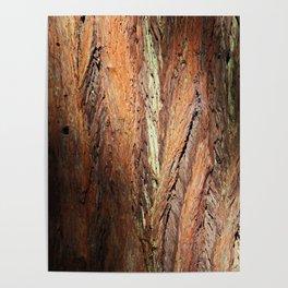 Muir Redwood I Poster