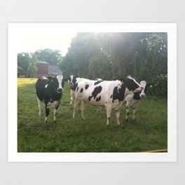 German Cows Art Print