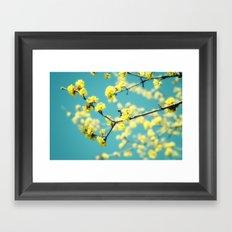 Yellow Spring blossoms Framed Art Print