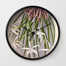 Brassavola Cuculatta Vintage White Orchids Wall Clock