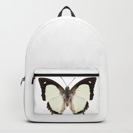 Butterfly species Polyura jalysus Backpack
