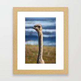 southafrica ... long neck Framed Art Print