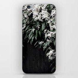 Clematis Armandii iPhone Skin