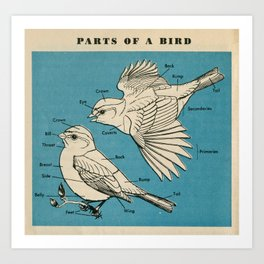 Parts of a Bird Art Print