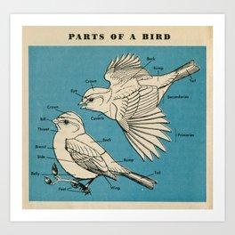 Parts of a Bird Art Print