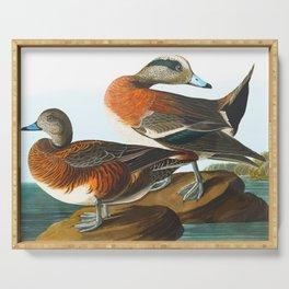 American Wigeon Audubon Birds Vintage Scientific Hand Drawn Illustration Serving Tray