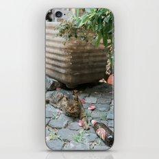 Drunken Kitty iPhone & iPod Skin
