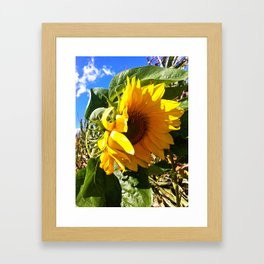 Sunflower. Framed Art Print