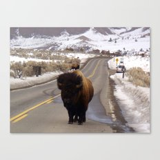 Montana Traffic Jam Canvas Print