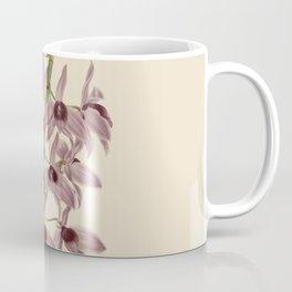R. Warner & B.S. Williams - The Orchid Album - vol 01 - plate 042 Coffee Mug