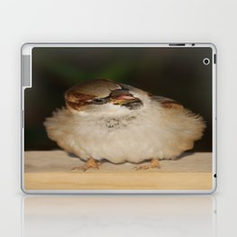 Hungry House Sparrow Laptop & iPad Skin