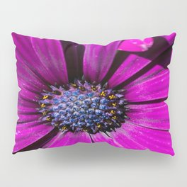 Purple Osteospermum Flower Pillow Sham