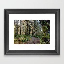 Rainforest Adventure II Framed Art Print
