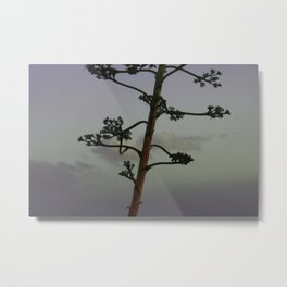 Agave flower stalk and clouds Metal Print