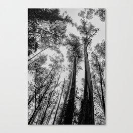 Fog Top Canvas Print