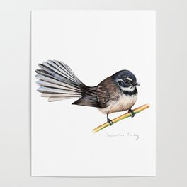 New Zealand Fantail Poster