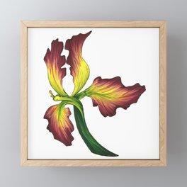 IRIS Framed Mini Art Print