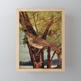 Neltje Blanchan - Bird Neighbours (1903) - Hermit Thrush Framed Mini Art Print
