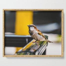 Summer Sidewalk Nature Bird. Photograph Serving Tray