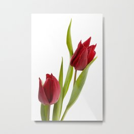 Two red tulip heads and green leaves Metal Print
