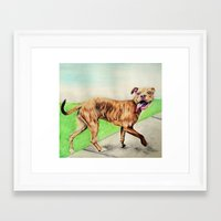 pitbull Framed Art Prints featuring pitbull by Shannon Gordy