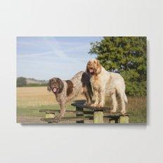 Italian Spinoni Dogs Woody & Ruben Metal Print