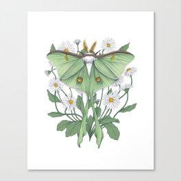 Metamorphosis - Luna Moth Canvas Print