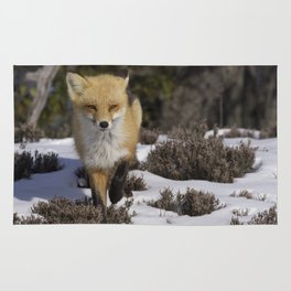 Red Fox on Snowy Beach Rug