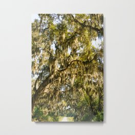 Savannah National Wildlife Refuge X Metal Print