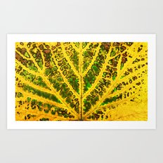 autumn vine leaf Art Print