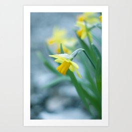 Spring is NOT cancelled Art Print