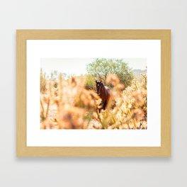 Wild Horse and Cholla Framed Art Print