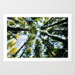 Circle of Nature Art Print