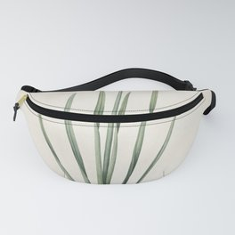 narcissus poeticus Redoute Roses 1 Fanny Pack