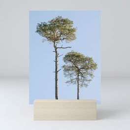 Coniferous Tree Series 2 of 3 Mini Art Print