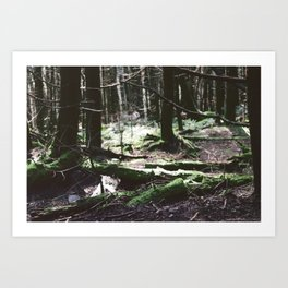 Peace In The Forest Art Print