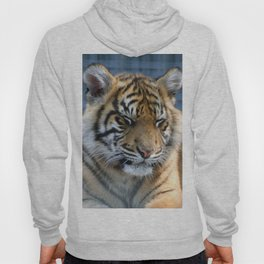 Tiger20151013 Hoody