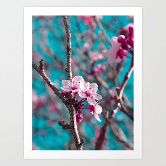 Pink Blossoms Art Print