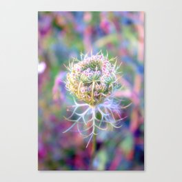 Wild carrot Canvas Print