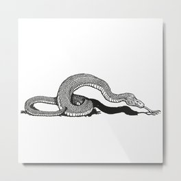 Snake 2 Metal Print
