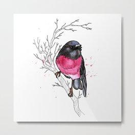 Pink Robin Metal Print