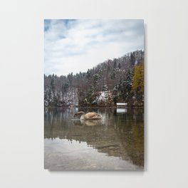 Beautiful scene of swan (lat. Cygnus olor) on the lake Metal Print