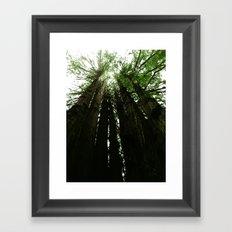 Redwoods #2 Framed Art Print
