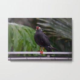 National Aviary - Pittsburgh - Inca Tern 2 Metal Print