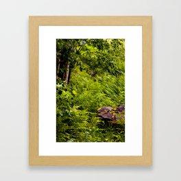 Lush Swedish Ferns Framed Art Print